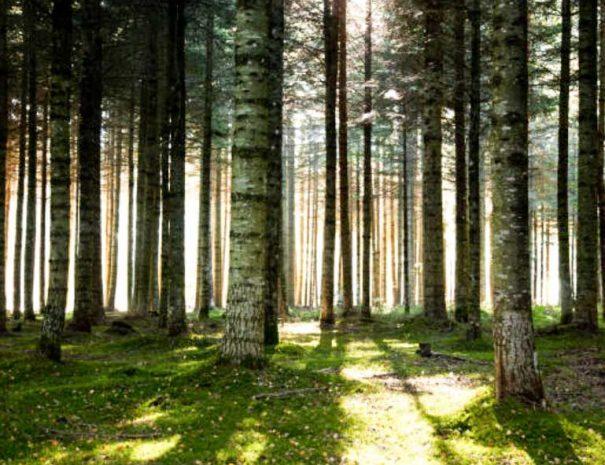 Voyage en Forêt de Brocéliande