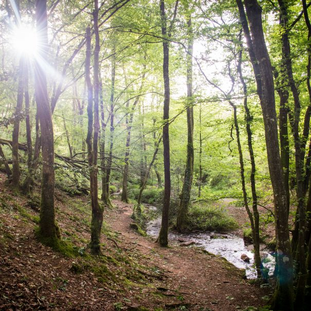 Stay in the Forest of Broceliande