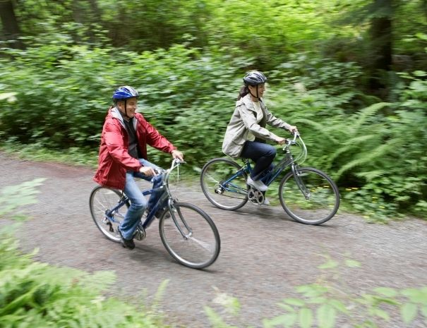 Visite en groupe à vélo de la forêt de Brocéliande