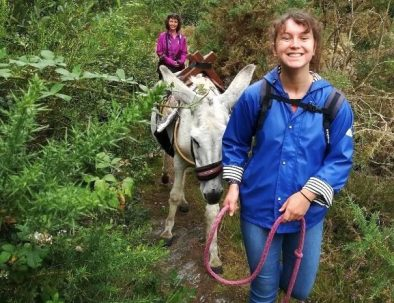 Balade avec un âne en vacance en forêt de Brocéliande