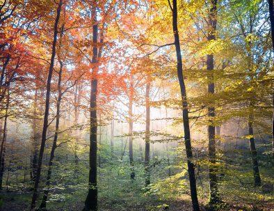Brocéliande forest visit