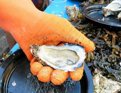 Guided tour to discover oyster farming in the bay of Morlaix
